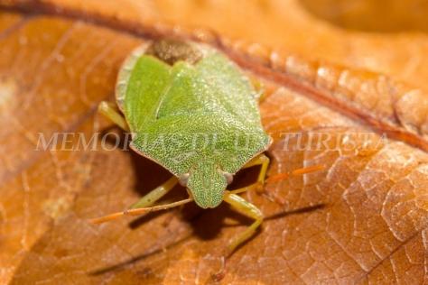 Pestosa verde