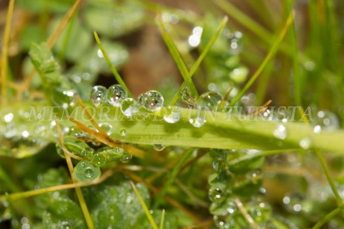 Gotas de agua en la hierba