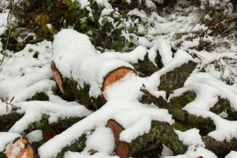 Troncos nevados en Las Jarillas