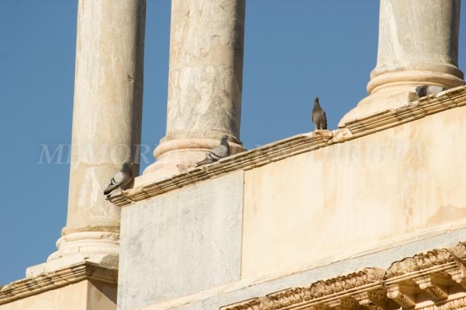 Palomas en el Teatro Romano