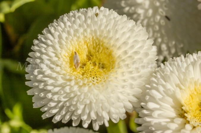 Flores en las inmediaciones de la Alcazaba