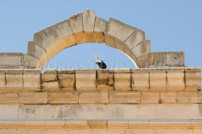 Cigüeña en el Templo de Diana