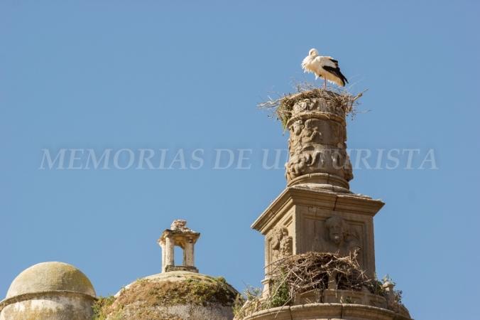Cigüeña en lo alto del conventual