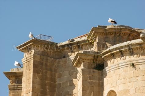 Cigüeñas en lo alto del conventual