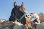 Mery y Pepe haciéndose un selfie con una yegua, en Montánchez (Cáceres)
