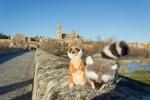 Mery y Pepe en el puente de piedra de Salamanca
